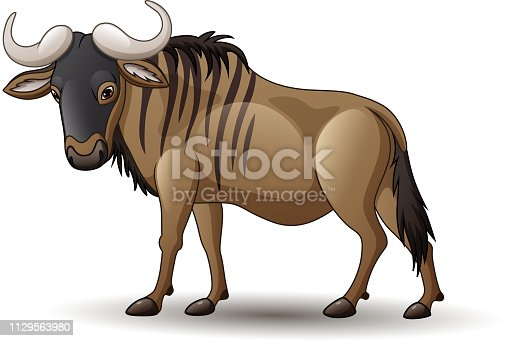 istock Illustration of wildebeest isolated on white background 1129563980