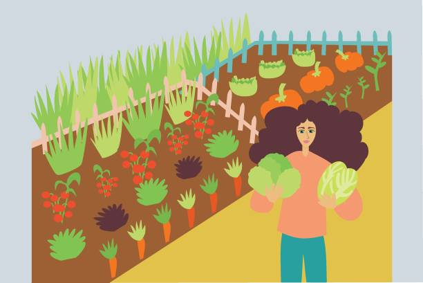 Illustration of woman cultivating organic and fresh vegetables in a farm vector art illustration
