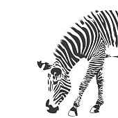 Illustration of zebra in black and white