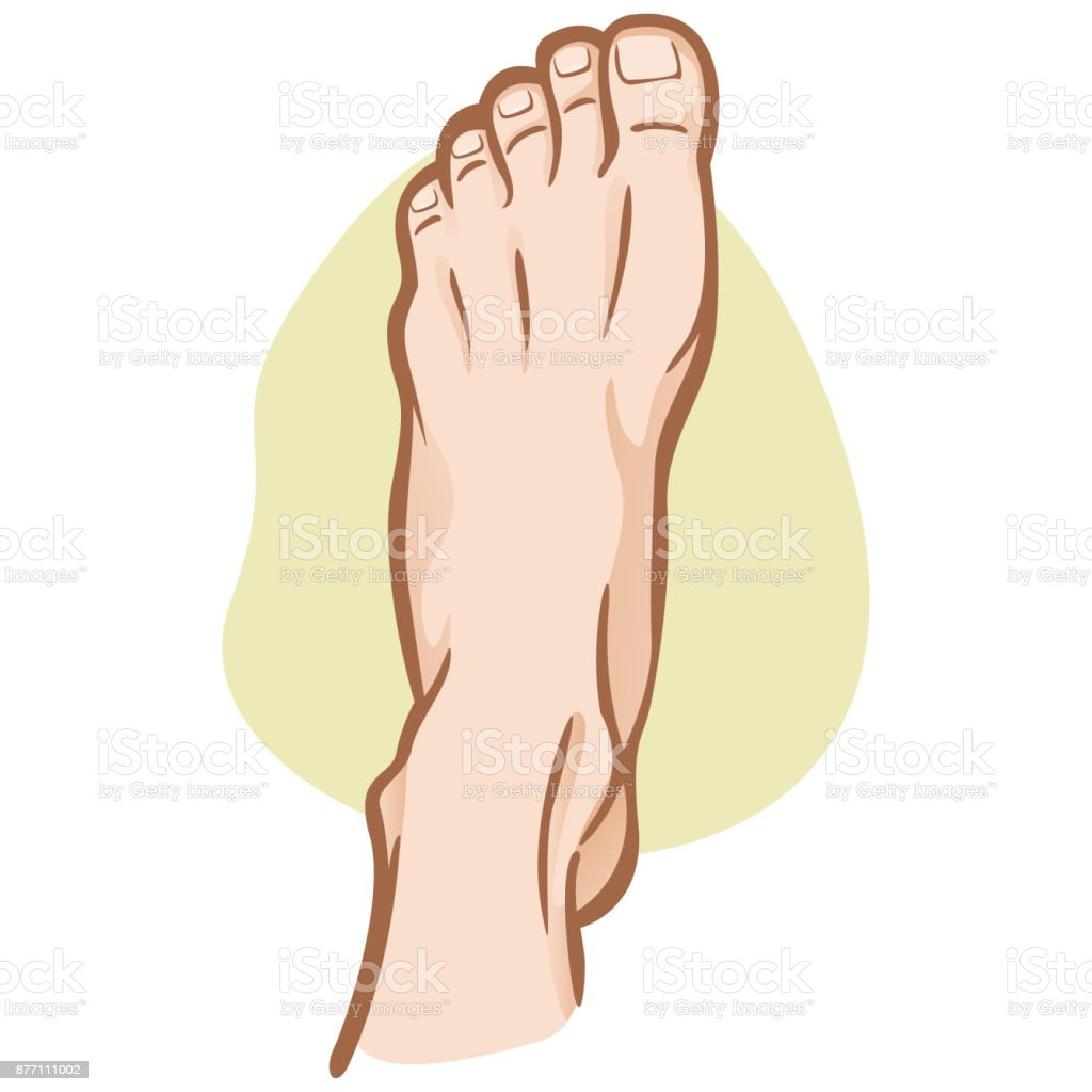 Illustration Person Human Foot Caucasian Top View Ideal For Catalogs ...