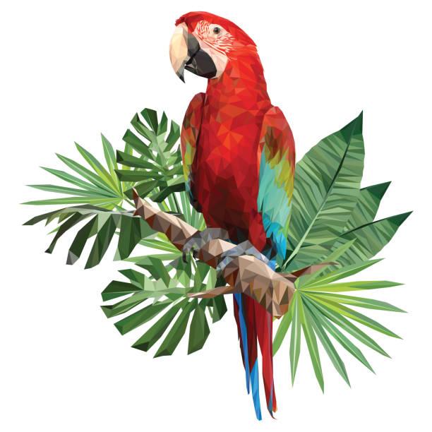 ilustrações de stock, clip art, desenhos animados e ícones de illustration polygonal drawing of green wing macaw. - arara