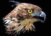 Illustration polygonal drawing of  the Changeable Hawk Eagle.