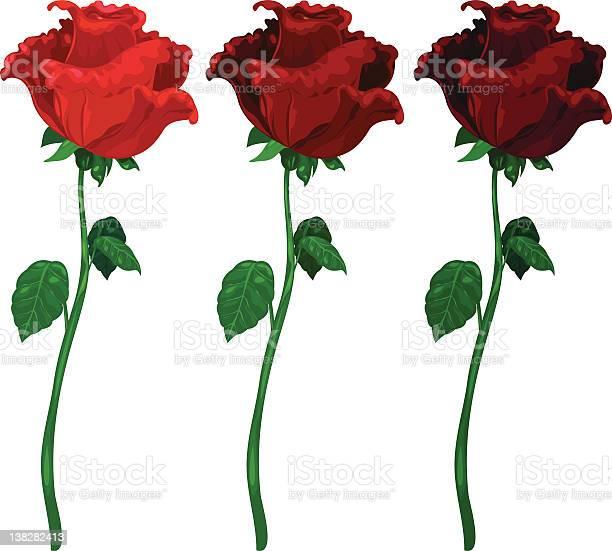 Illustration roses 3 color vector id138282413?b=1&k=6&m=138282413&s=612x612&h=bnb94nelibsmxftdqyiczp2hcwbh zuwjgxdcglbtxa=