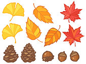 This is an illustration set of autumn leaves, acorns and pinecones.