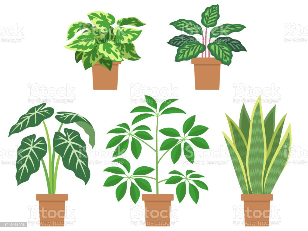 Illustration Set Of Foliage Plants Stock Illustration Download Image Now Istock