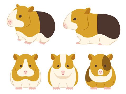 Illustration set of guinea pigs