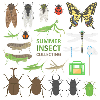 Illustration set of summer insects.