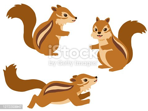 Illustration set of squirrels in various poses