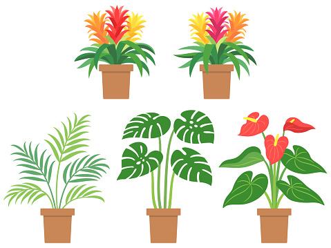 Illustration set of tropical foliage plants
