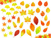 This is a watercolor style vector illustration set of various autumn leaves. (Japanese maple, Ginkgo, Quercus, Yoshino cherry, White birch, Sawtooth Oak, Japanese zelkova, Oriental Plane, etc.)