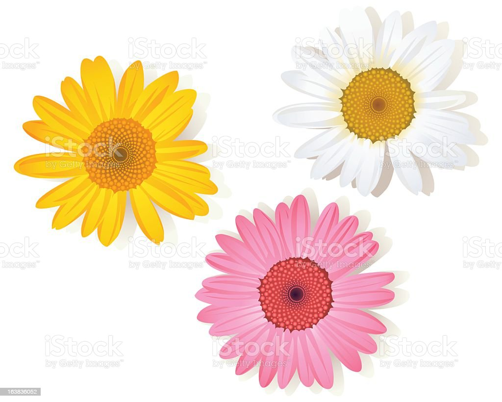 Illustration set of white, pink, and yellow daisy flowers