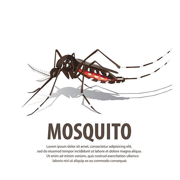 illustrazioni stock, clip art, cartoni animati e icone di tendenza di illustration vector. target on mosquito. - zanzare