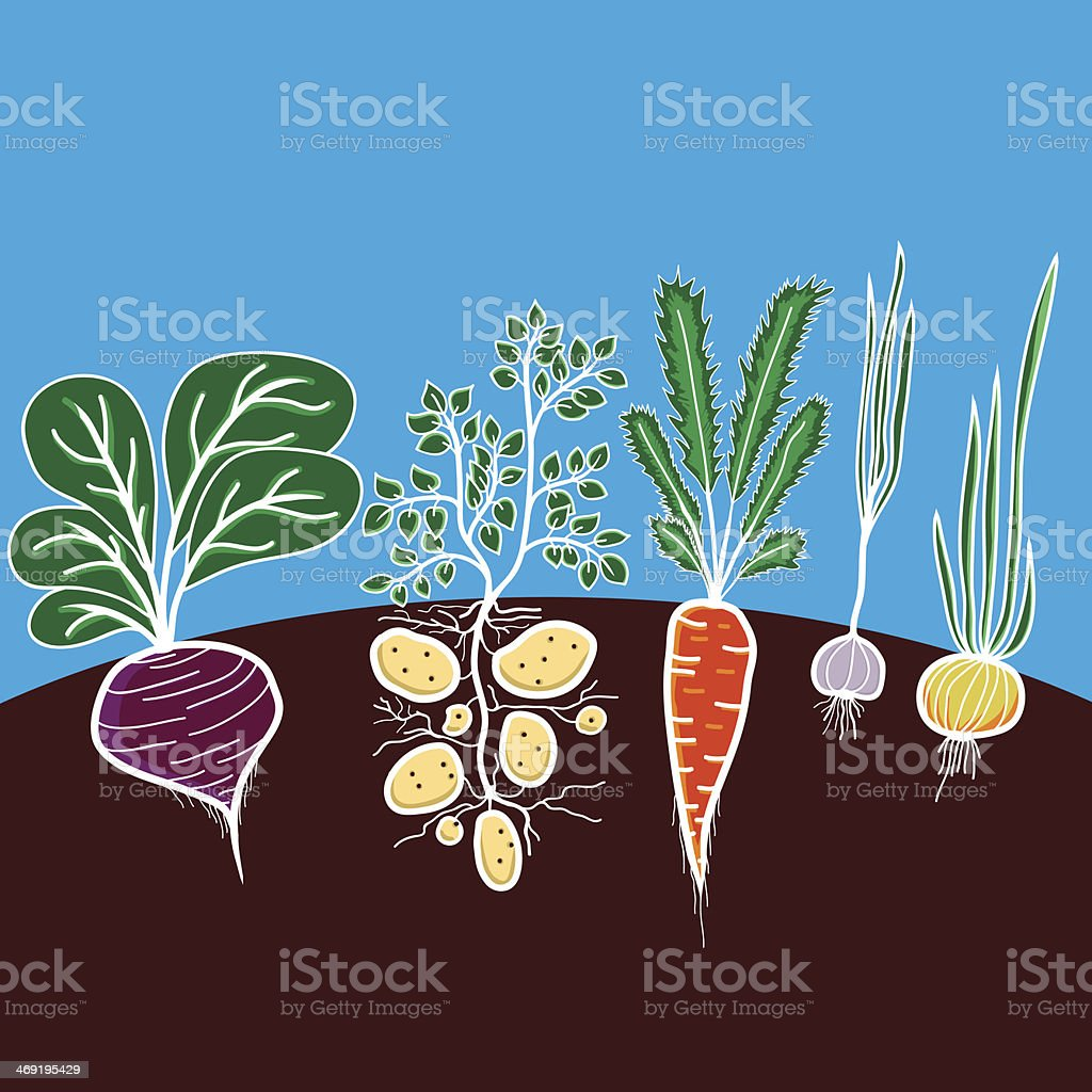 Illustration with growing vegetables vector art illustration