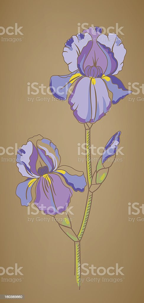 Illustration with iris royalty-free illustration with iris stock vector art & more images of beauty