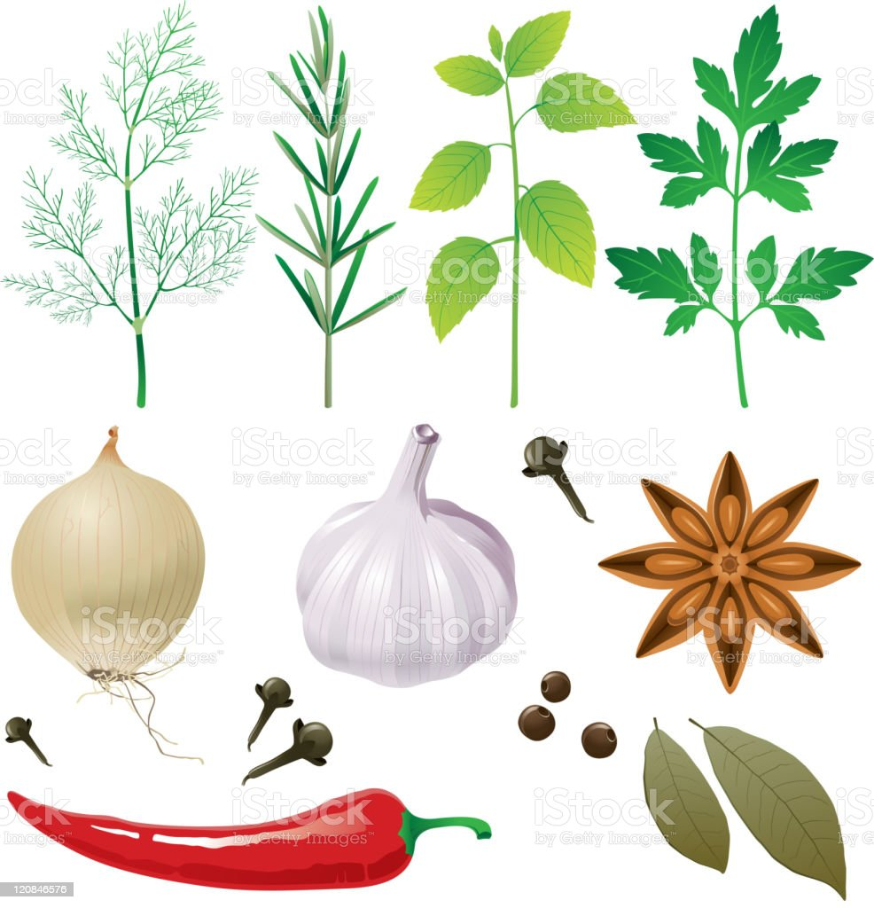 Illustration with several herbs, seeds and spices royalty-free stock vector art