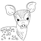 Illustration young deer portrait on white background. Vector hand drawn of baby deer with naive eyes.