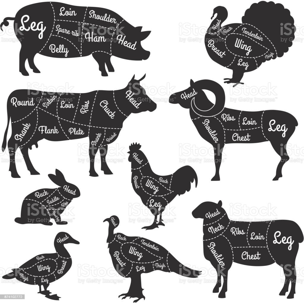 Illustrations for butcher shop. Cutting lines of different parts of domestic animals vector art illustration