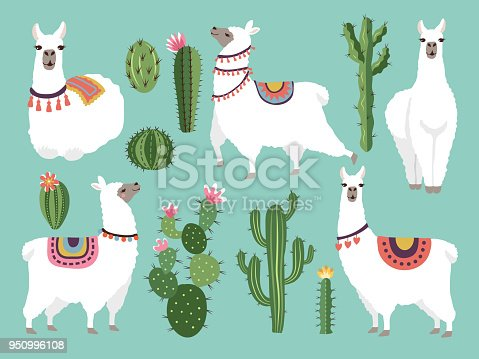 Illustrations of funny llama. Vector animal in flat style. Alpaca character and lama, nature wildlife