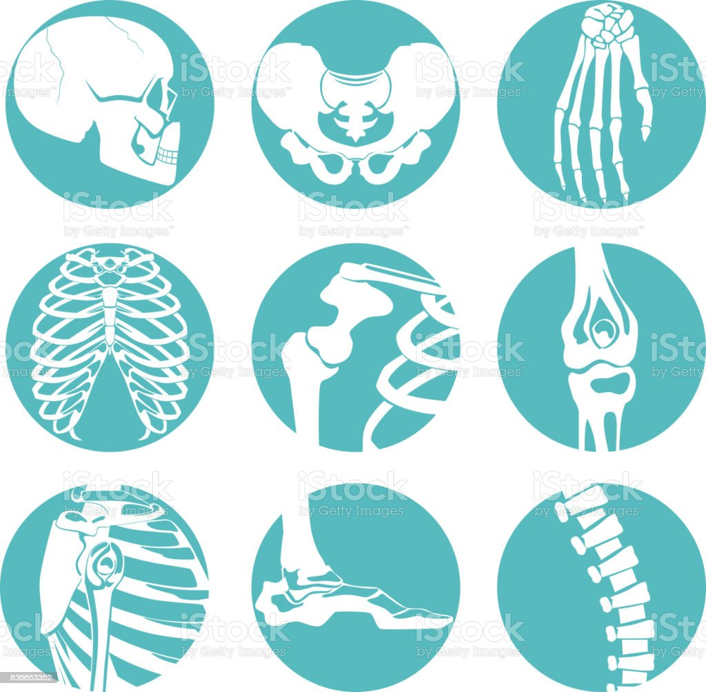 Illustrations of human anatomy. Orthopedic pictures of skeleton and different bones vector art illustration