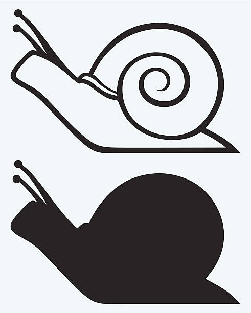 illustrations of snail cartoons in outline and silhouette - snail stock illustrations
