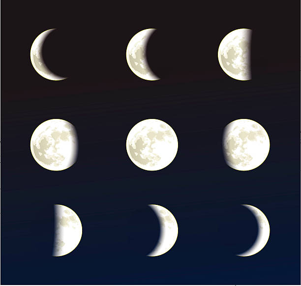 Illustrations of the phases of the moon  vector art illustration