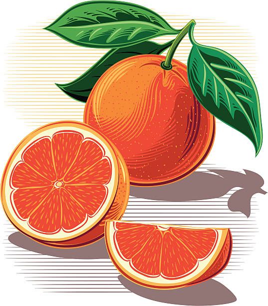 Illustrations of whole and sliced oranges vector art illustration