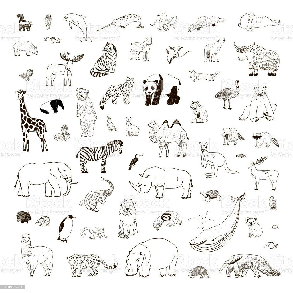 Illustrationen mit handgezeichneten Tieren - Lizenzfrei Afrika Vektorgrafik