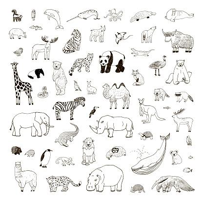 Illustrations set with hand drawn animals