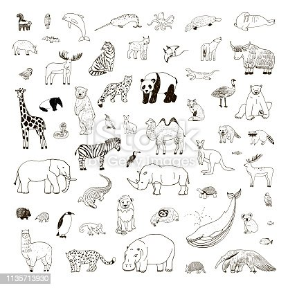 Illustrations set with hand drawn animals, vector line wildlife collection
