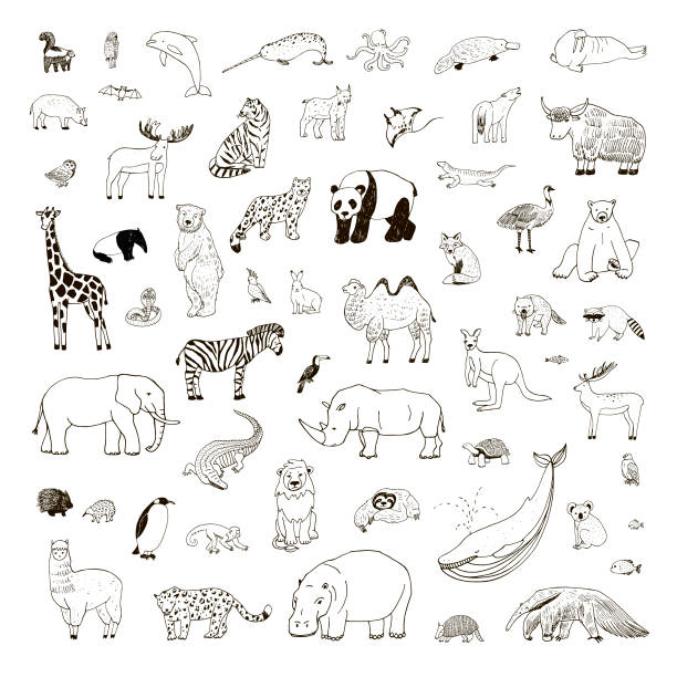 Illustrations set with hand drawn animals Illustrations set with hand drawn animals, vector line wildlife collection animal stock illustrations