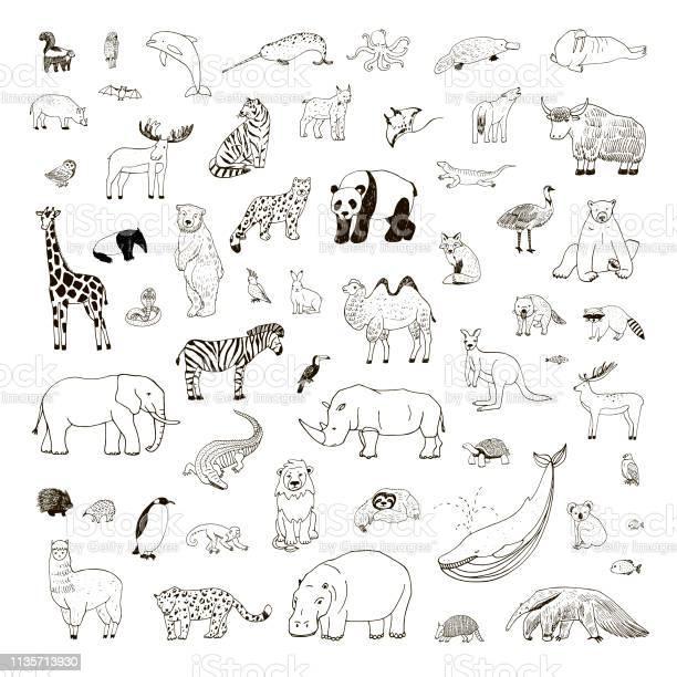 Illustrationen Mit Handgezeichneten Tieren Stock Vektor Art und mehr Bilder von Afrika