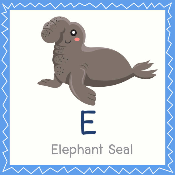 Elephant De Mer Vectoriels Et Illustrations Libres De Droits Istock