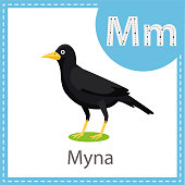 Illustrator of Myna bird