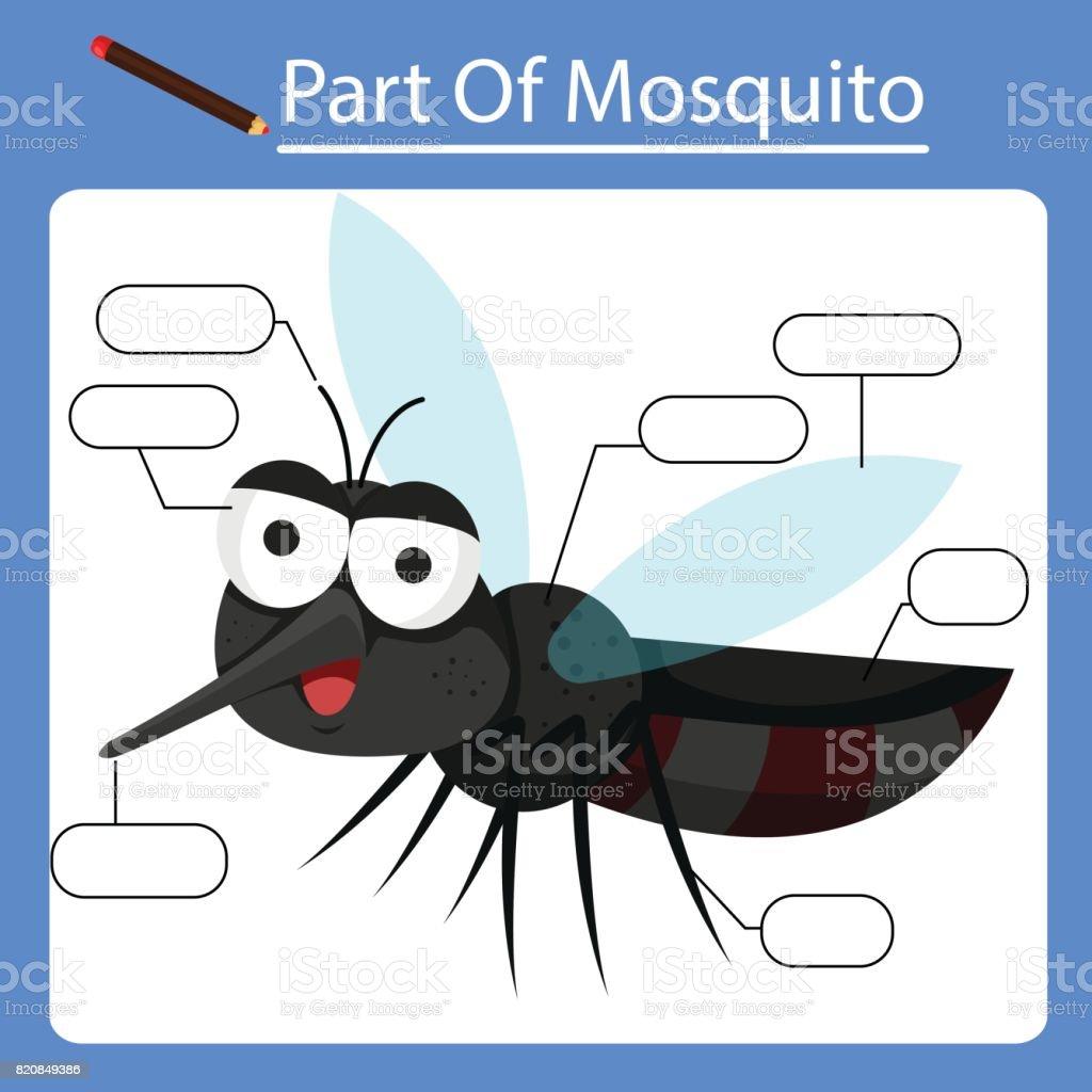 Ilustración de Ilustrador De Partes Del Mosquito y más banco de ...