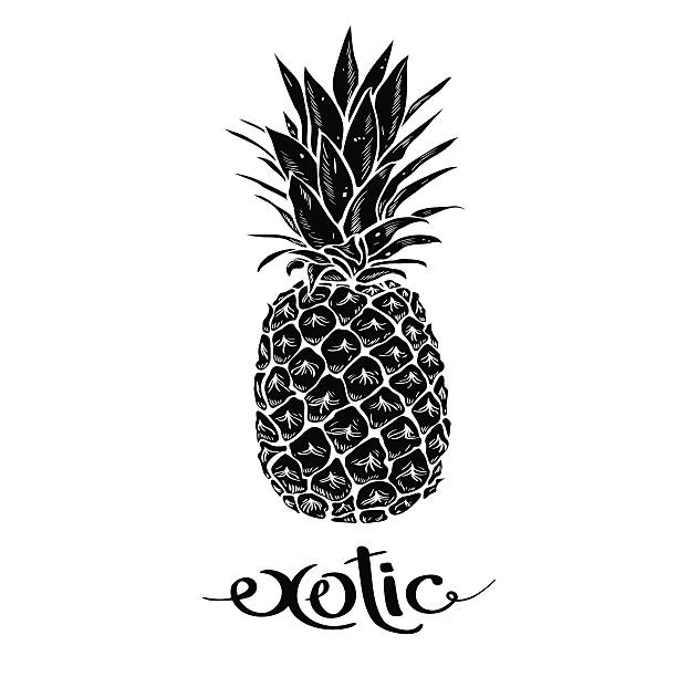 Image of black and white pineapple fruit  lettering exotic – artystyczna grafika wektorowa