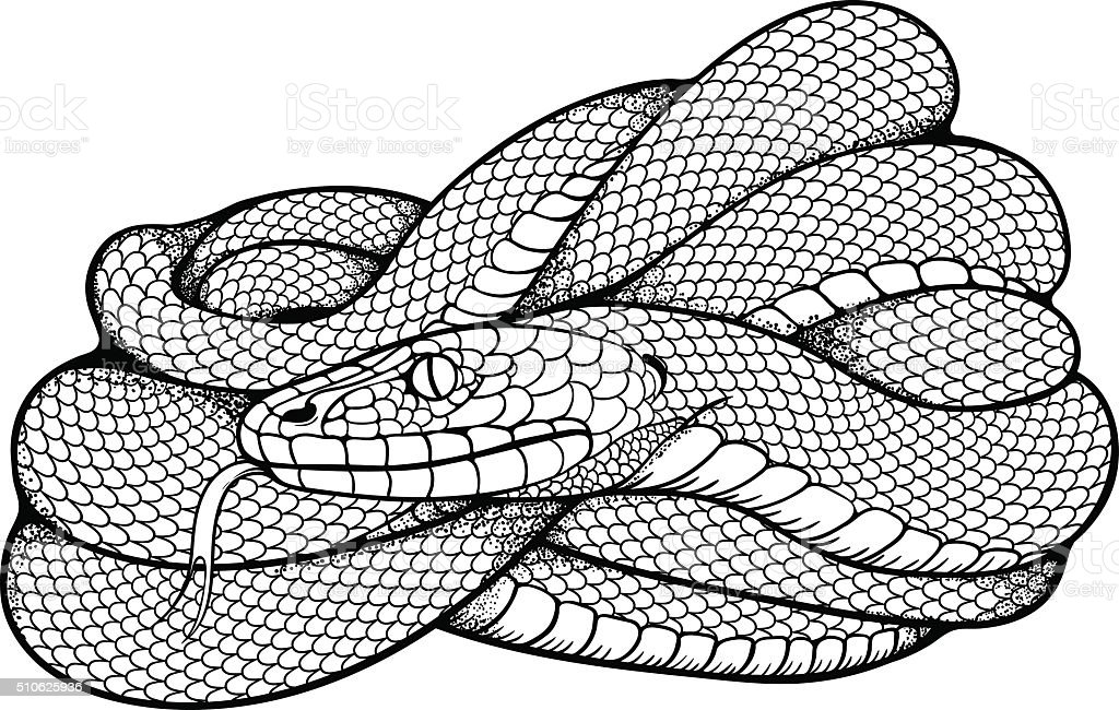 image of coiled snake vector art illustration