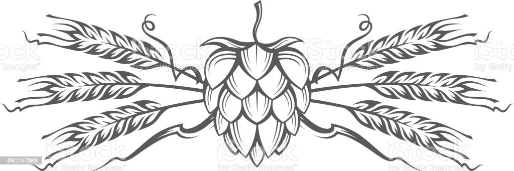 image of hop and barley ear vector art illustration