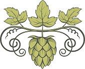 image of hops