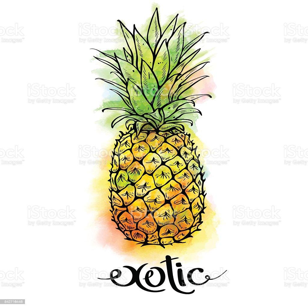 Obraz soku ananasowego z owoców i liter egzotyczne na białym tle – artystyczna grafika wektorowa