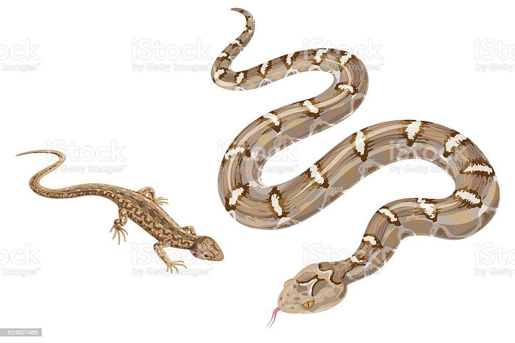 Ilustración de Imagen De Serpiente Y Lagarto Aislado Sobre Blanco y ...