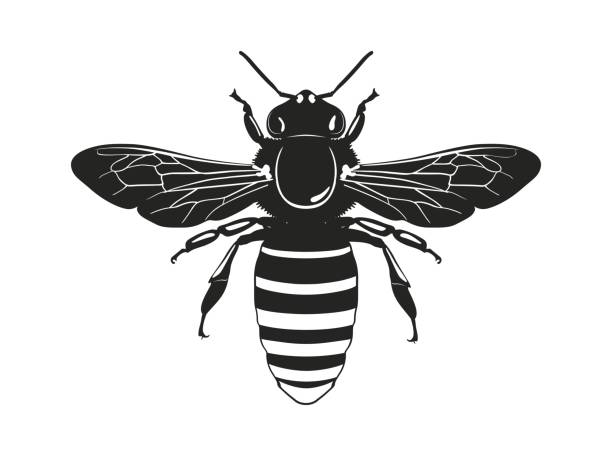 Image of the bee silhouette. View from above. Vector illustration. Vector silhouette bee isolated on a white background. Flying insect. swarm of insects stock illustrations