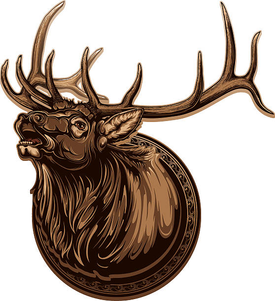 Image of vivid bull elk with long antlers vector art illustration