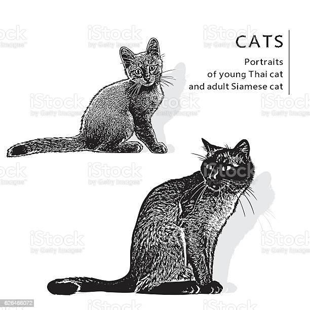 Image of young thai cat and adult siamese cat vector id626466072?b=1&k=6&m=626466072&s=612x612&h= cugsfqhxs126kf6q9 45ye0iwmlbg ri0bhyfq1o50=