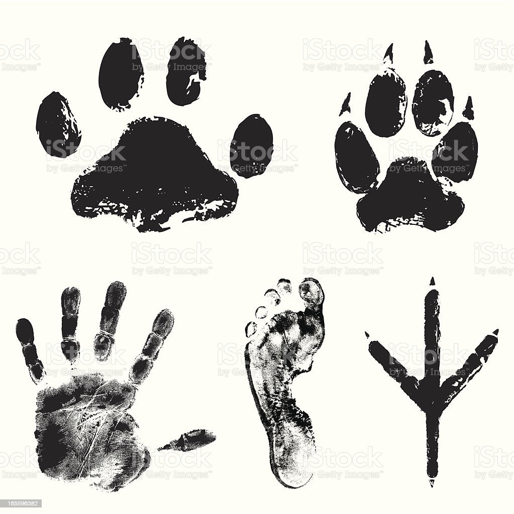 Image showing various animal tracks royalty-free image showing various animal tracks stock vector art & more images of animal