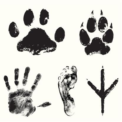 Image showing various animal tracks