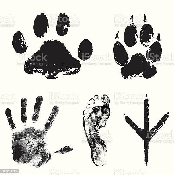 Image showing various animal tracks vector id165596382?b=1&k=6&m=165596382&s=612x612&h=opo1scrml0dso n4fjivjub tbiynz0mlouyqqyff1o=