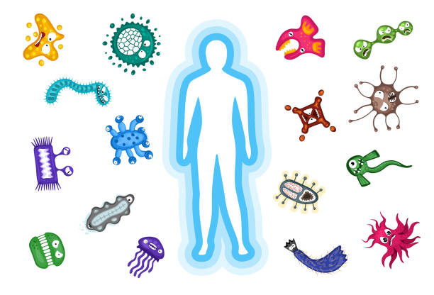Immune protection system. Body reflect germ bacteria and viruse infection attack. Vector illustration on white background Immune protection system. Body reflect germ bacteria and viruse infection attack. Vector eps illustration on white background bacillus subtilis stock illustrations