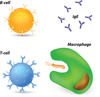 immune system cells and antibodies
