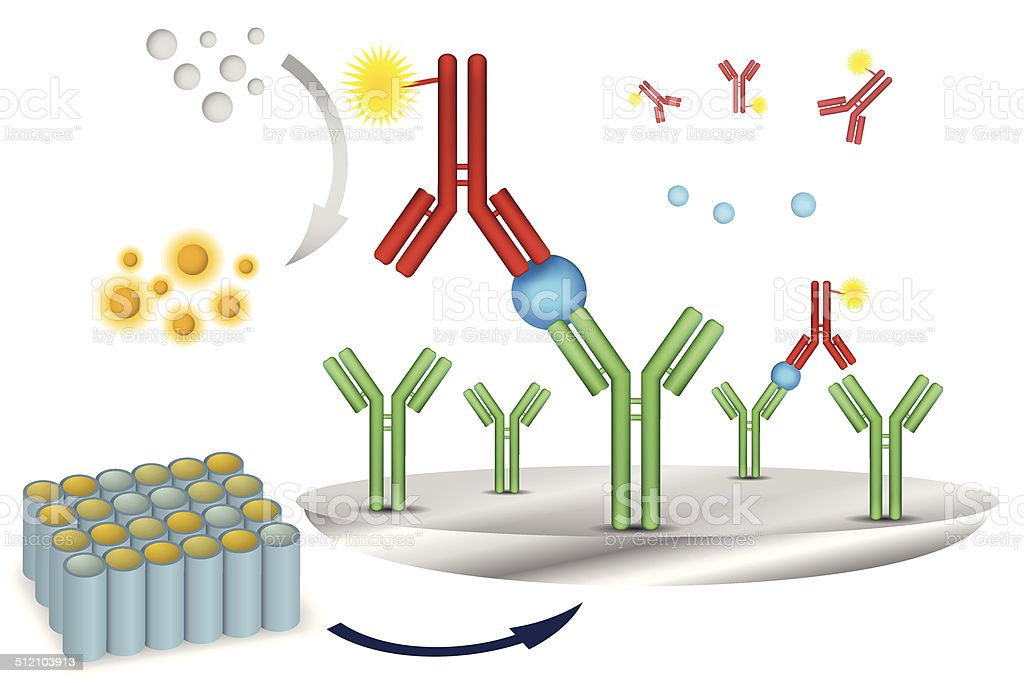 ELISA immuno assay reaction scheme vector art illustration