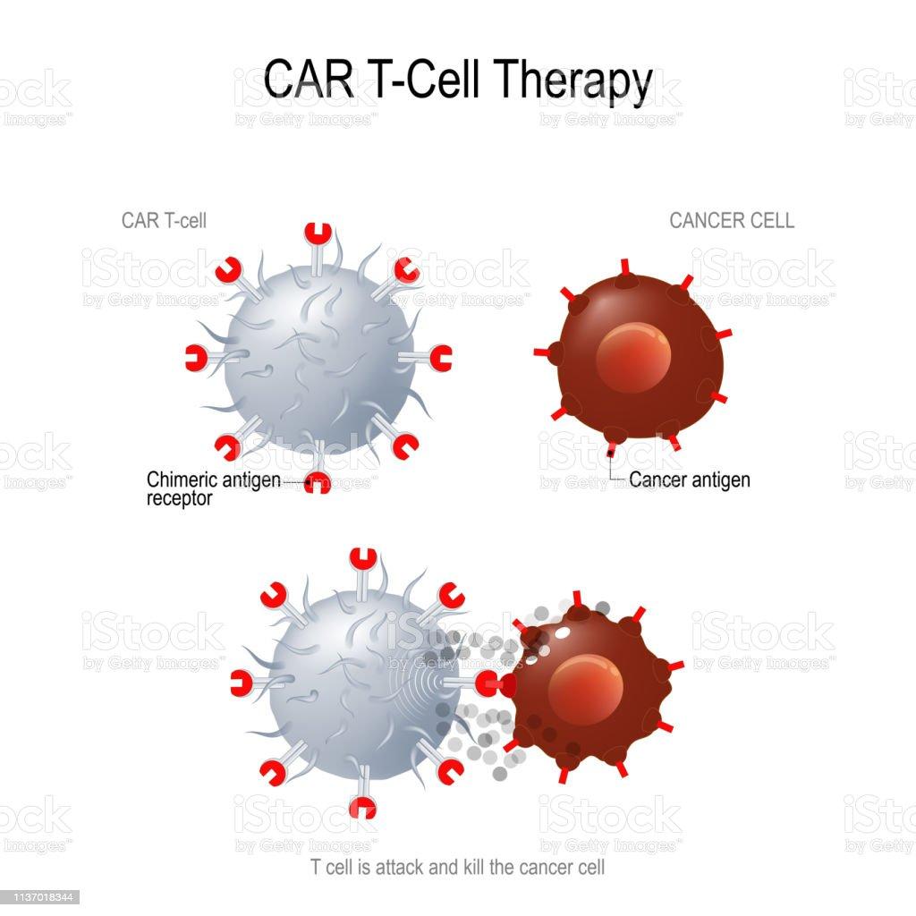 CAR T immunotherapy car t immunotherapy - immagini vettoriali stock e altre immagini di anticorpo royalty-free